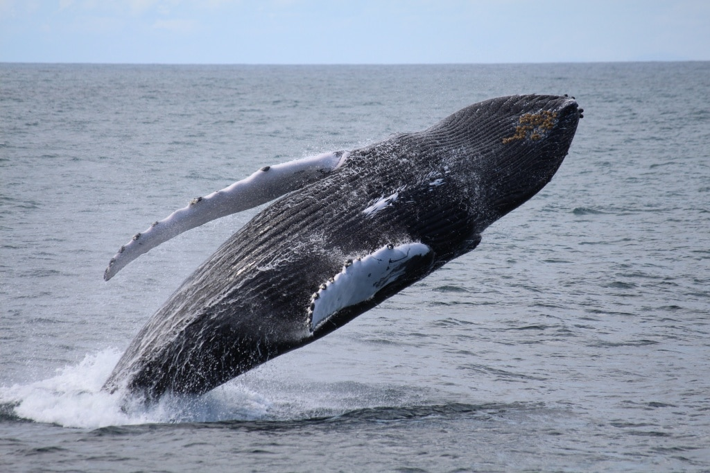 best whale watching in iceland - photo from Christina Degener
