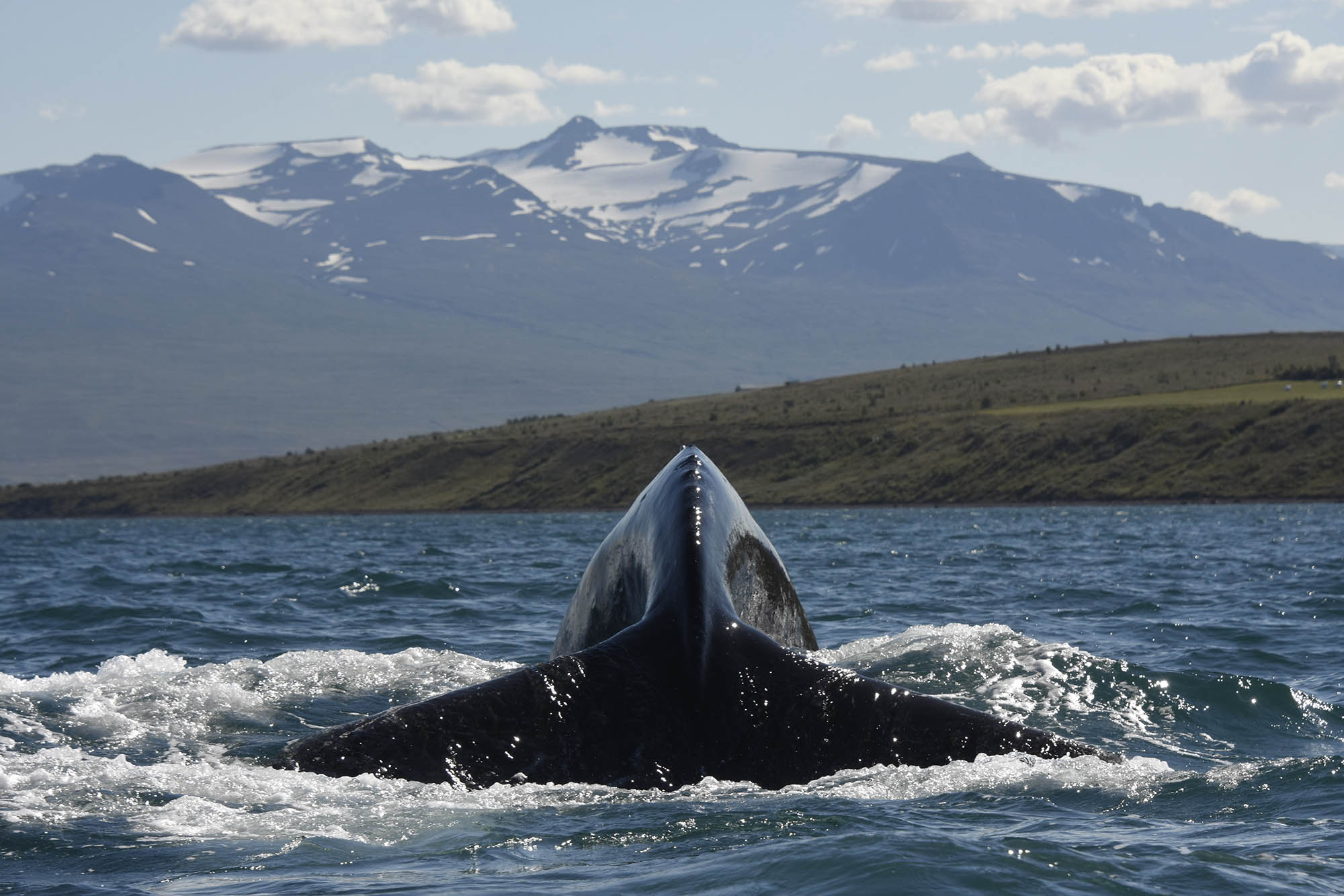 north iceland whale watching