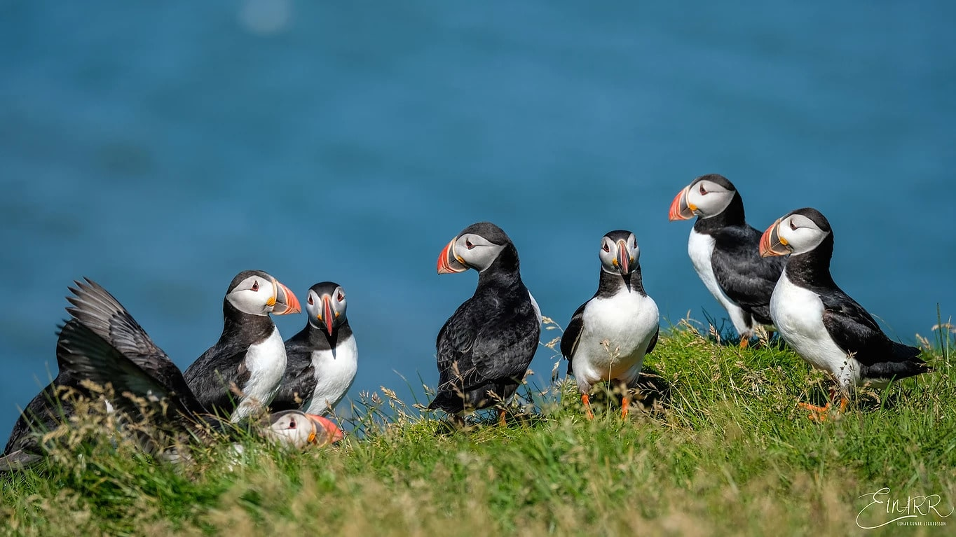 Bird watching tour in Iceland