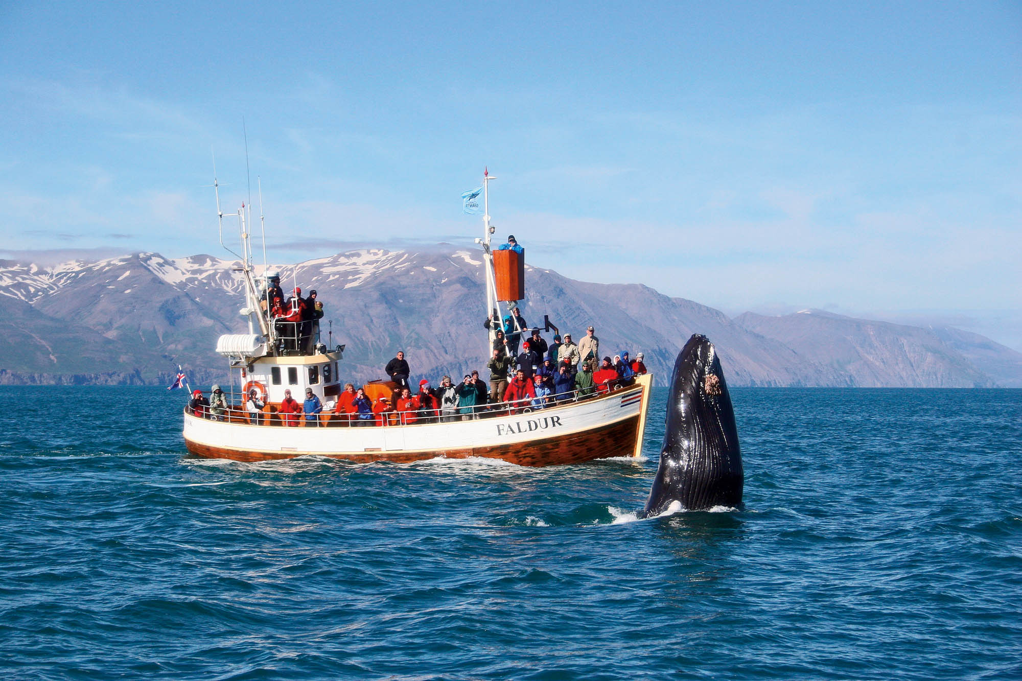 Whale watching in Husavik