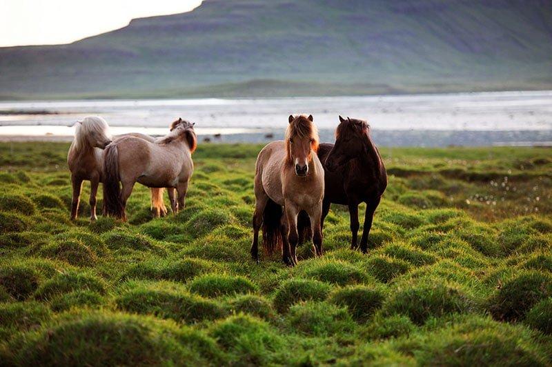 Horseback Riding in Akureyri