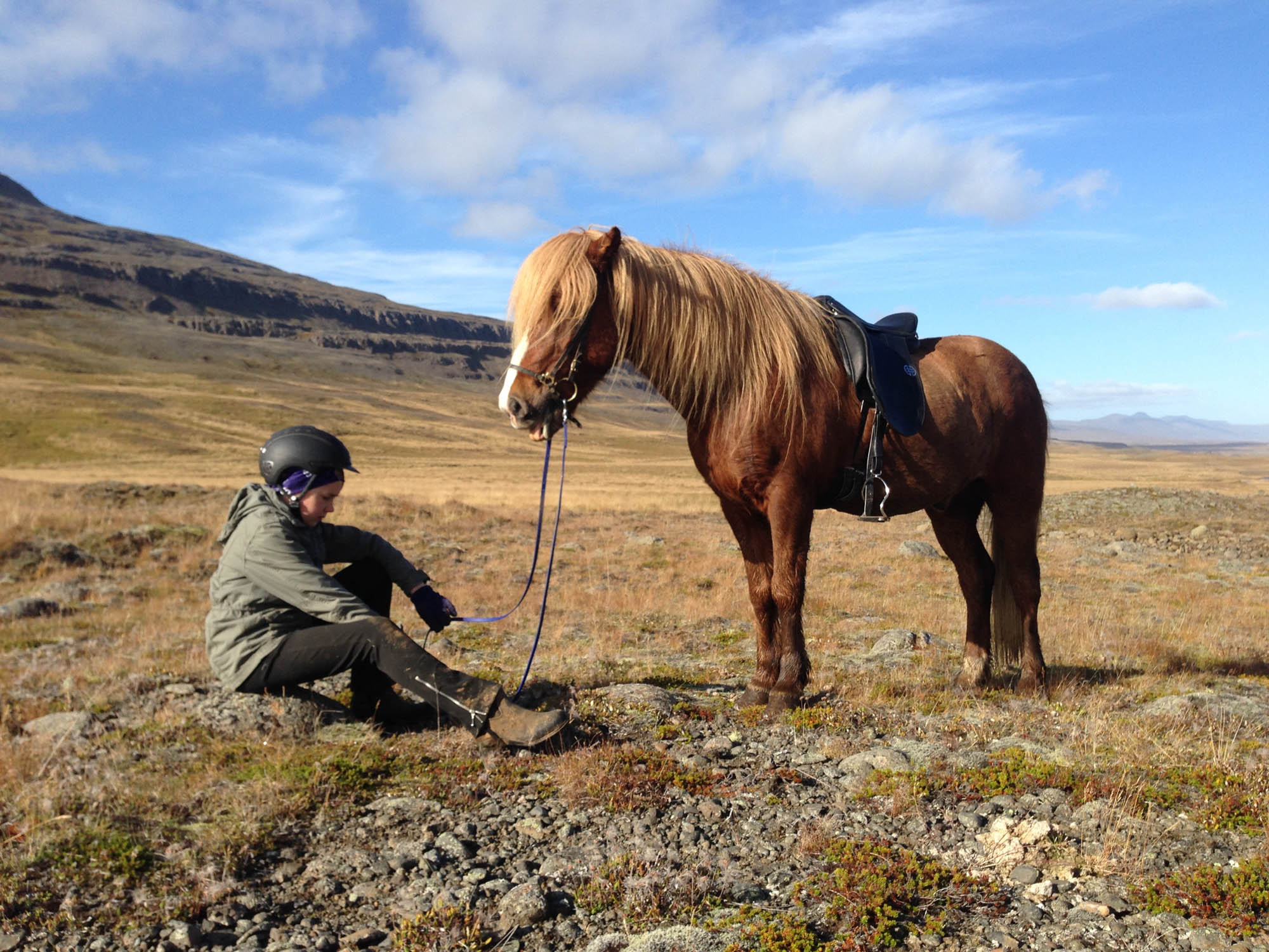 horseback riding north iceland