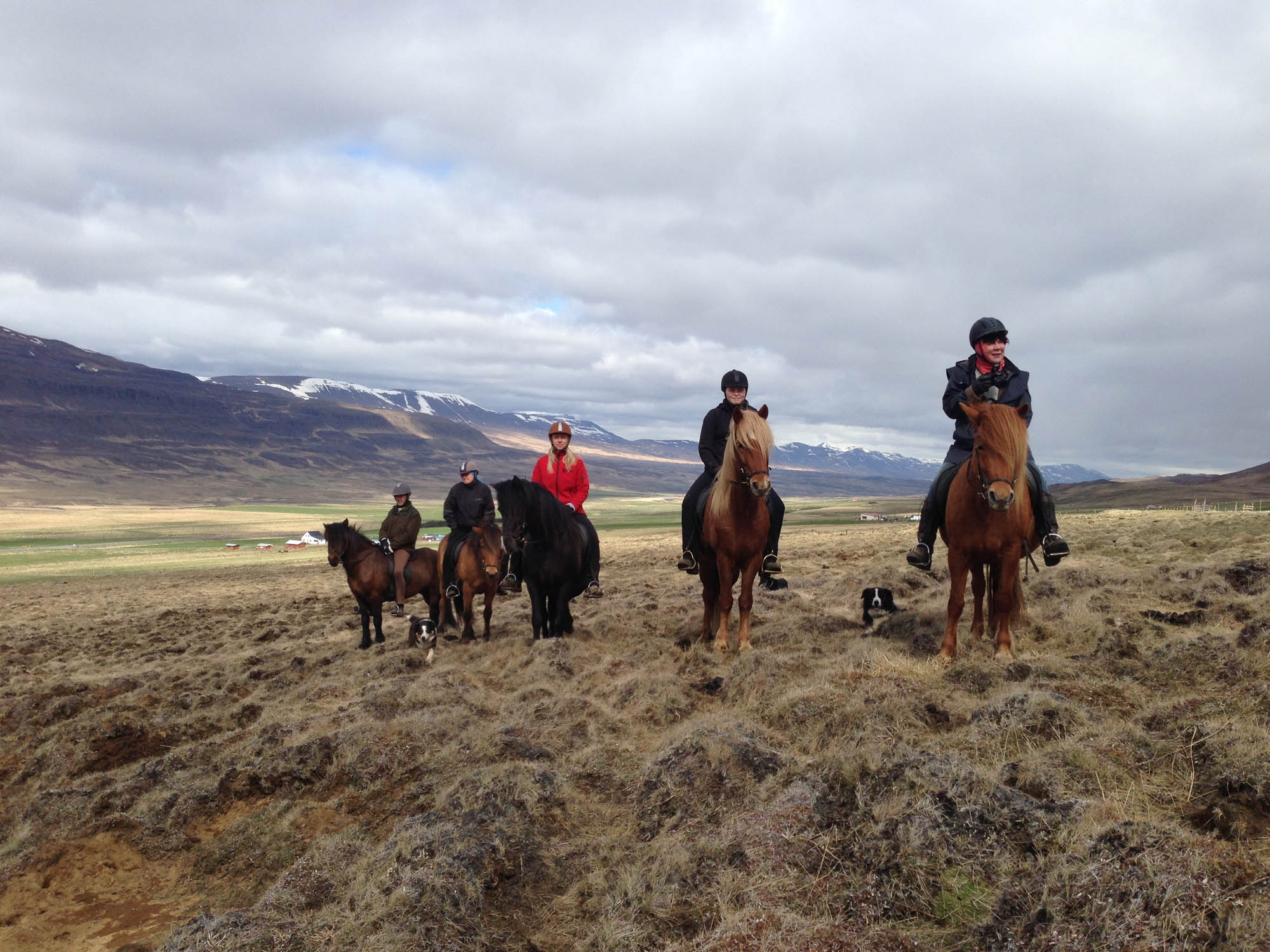 north iceland horse riding tour