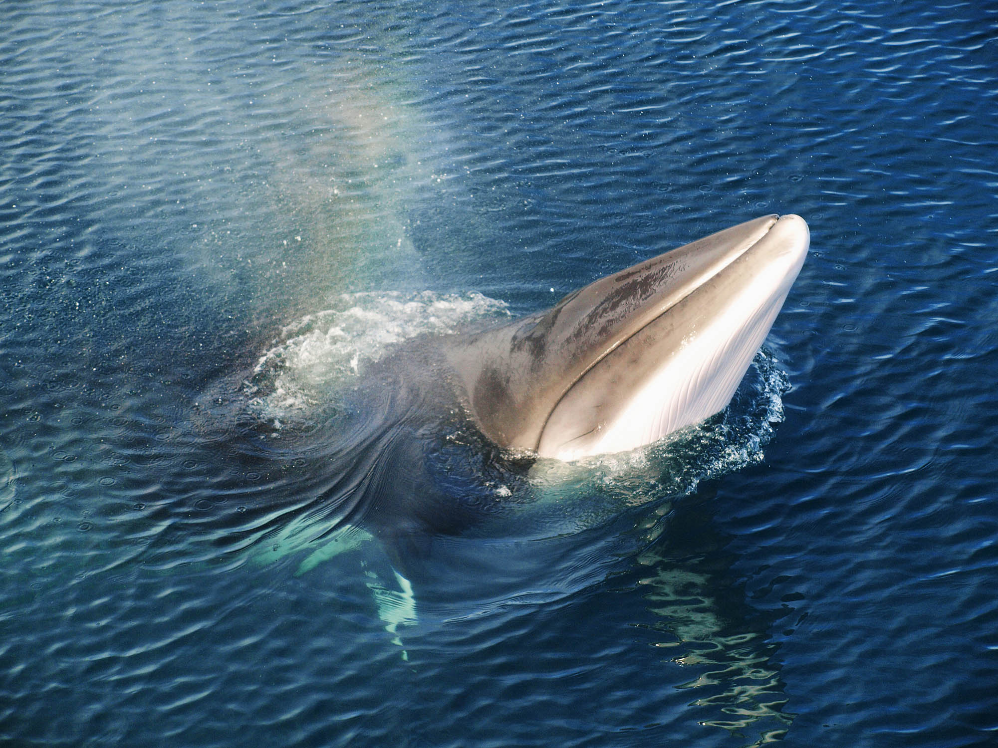 Iceland whale watching holiday