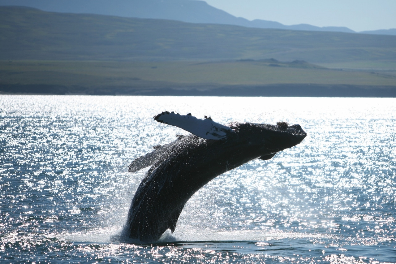 Whale watching, puffins and sails