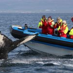 husavik whale watching tour