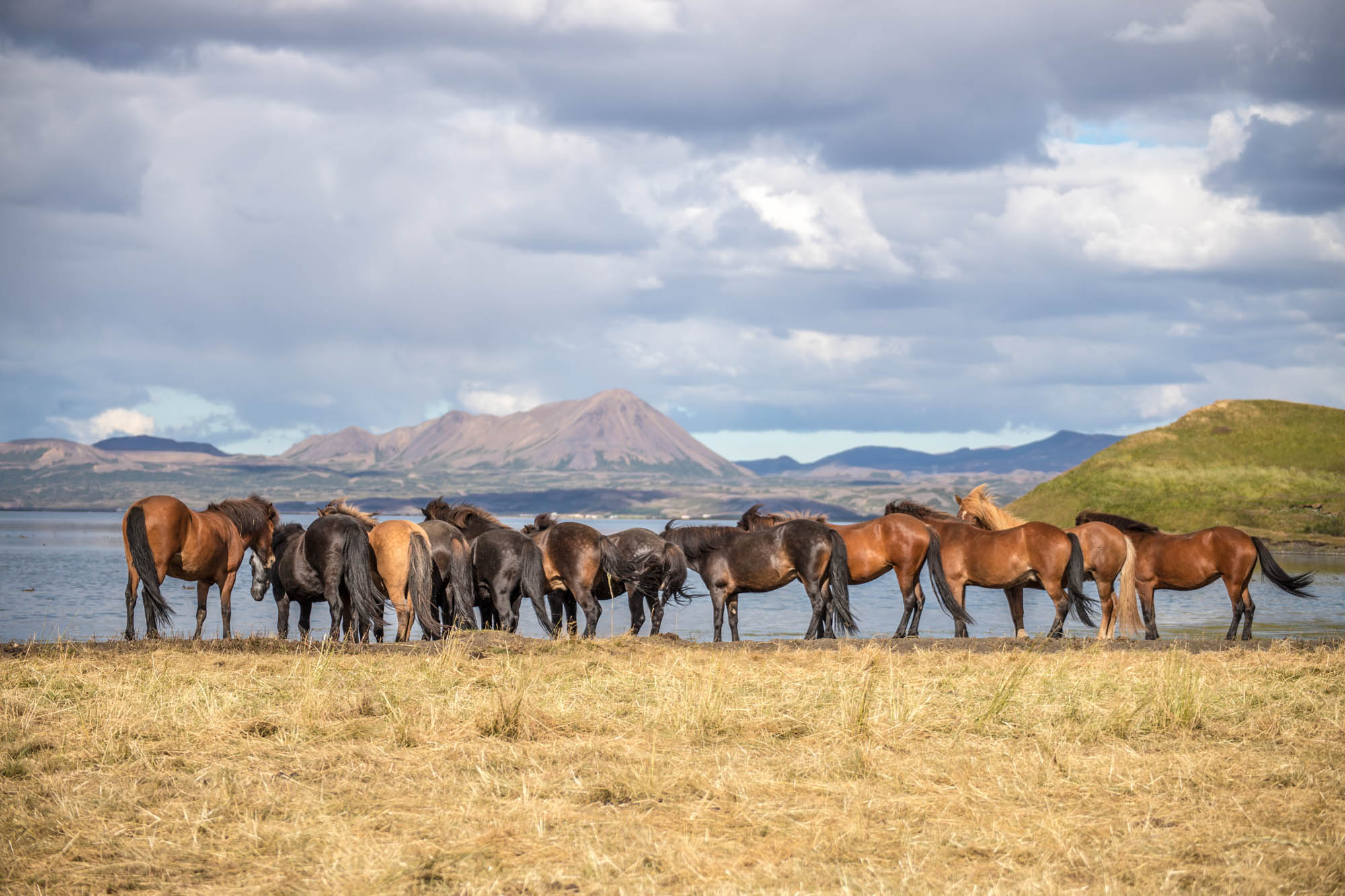 Horses at Lake Mývatn - Iceland Family Holidays