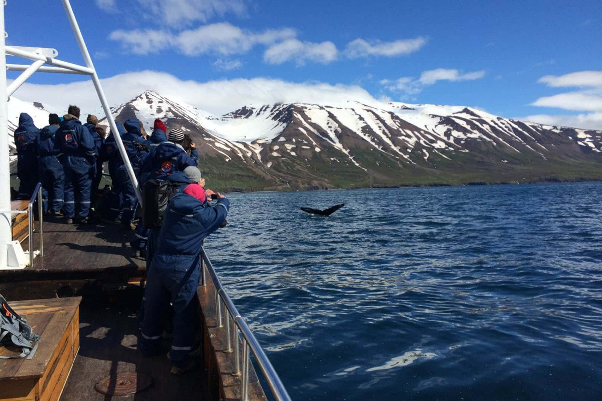 Whale watching in Dalvik - North Iceland