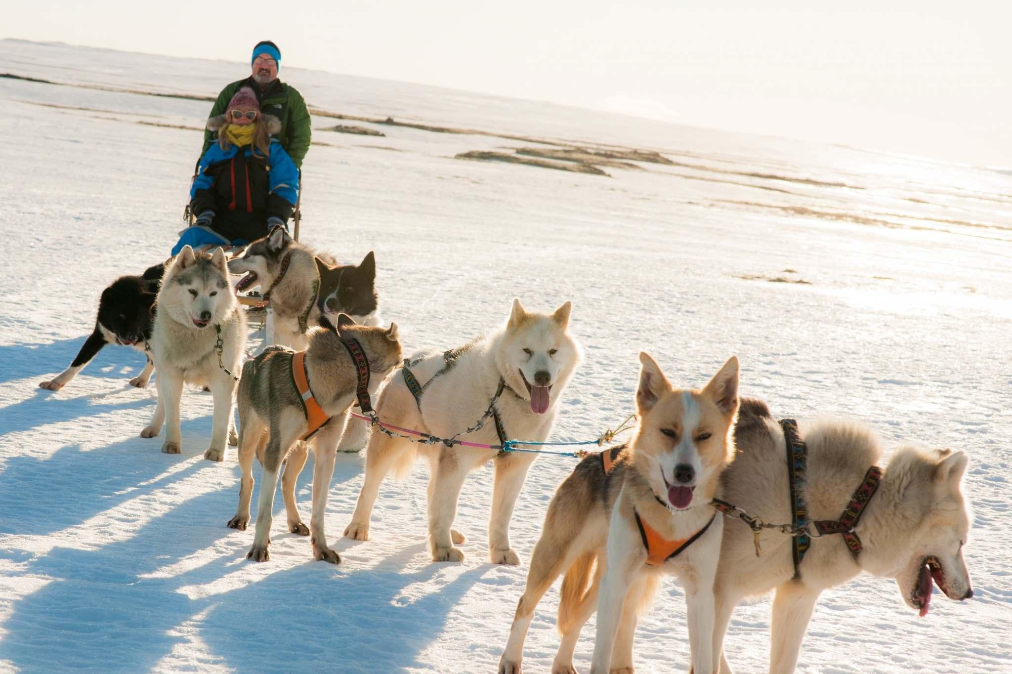 husky sledding from reykjavik