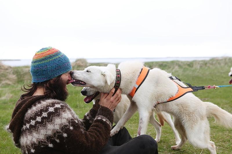 husky ride iceland