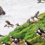 grimsey island tour