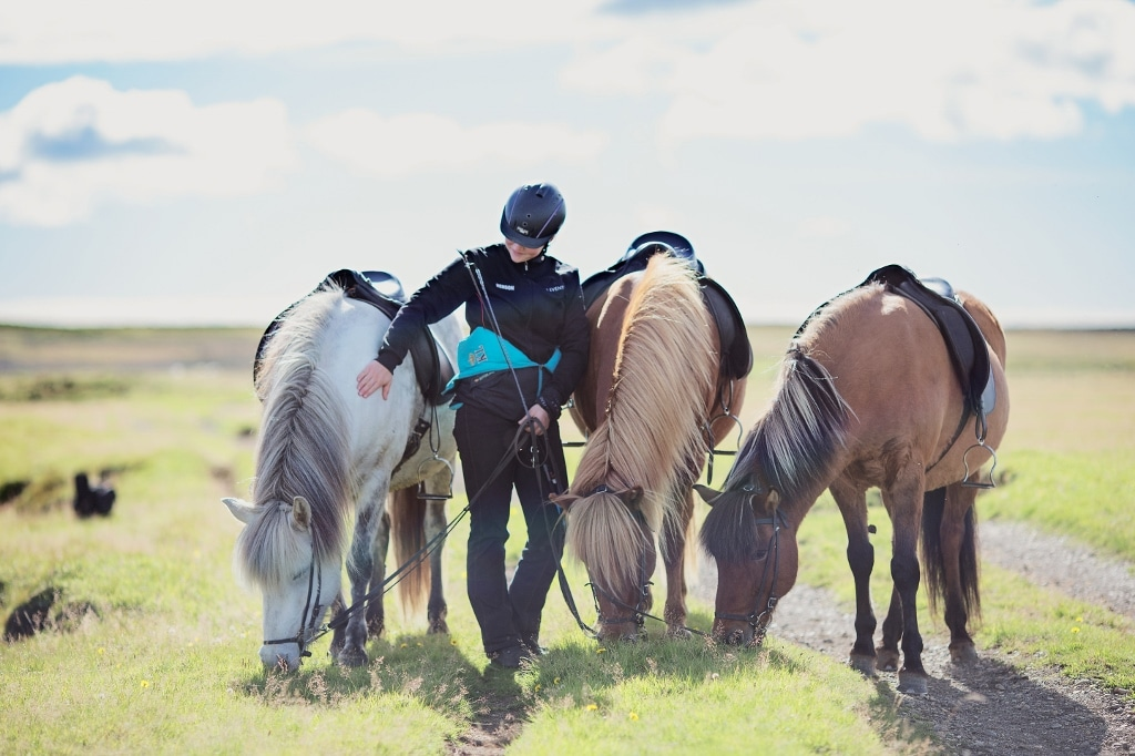 horse riding south iceland