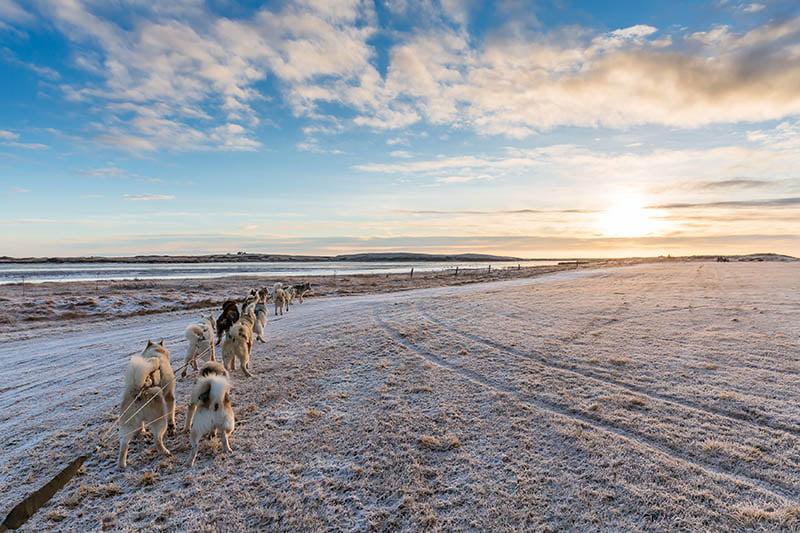 husky sledding iceland