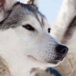 private myvatn tour with dog sledding