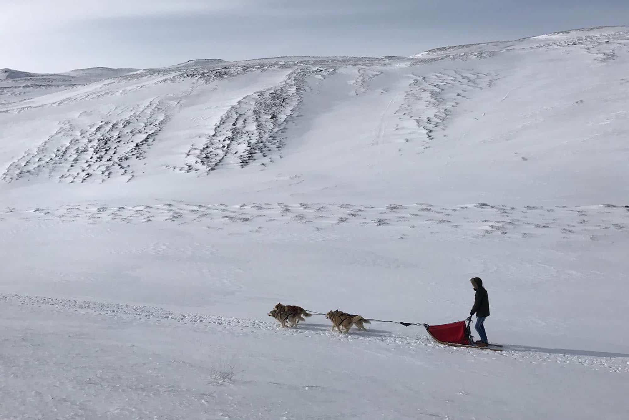 Myvatn private tour with dogsledding