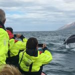 dalvik whale watching
