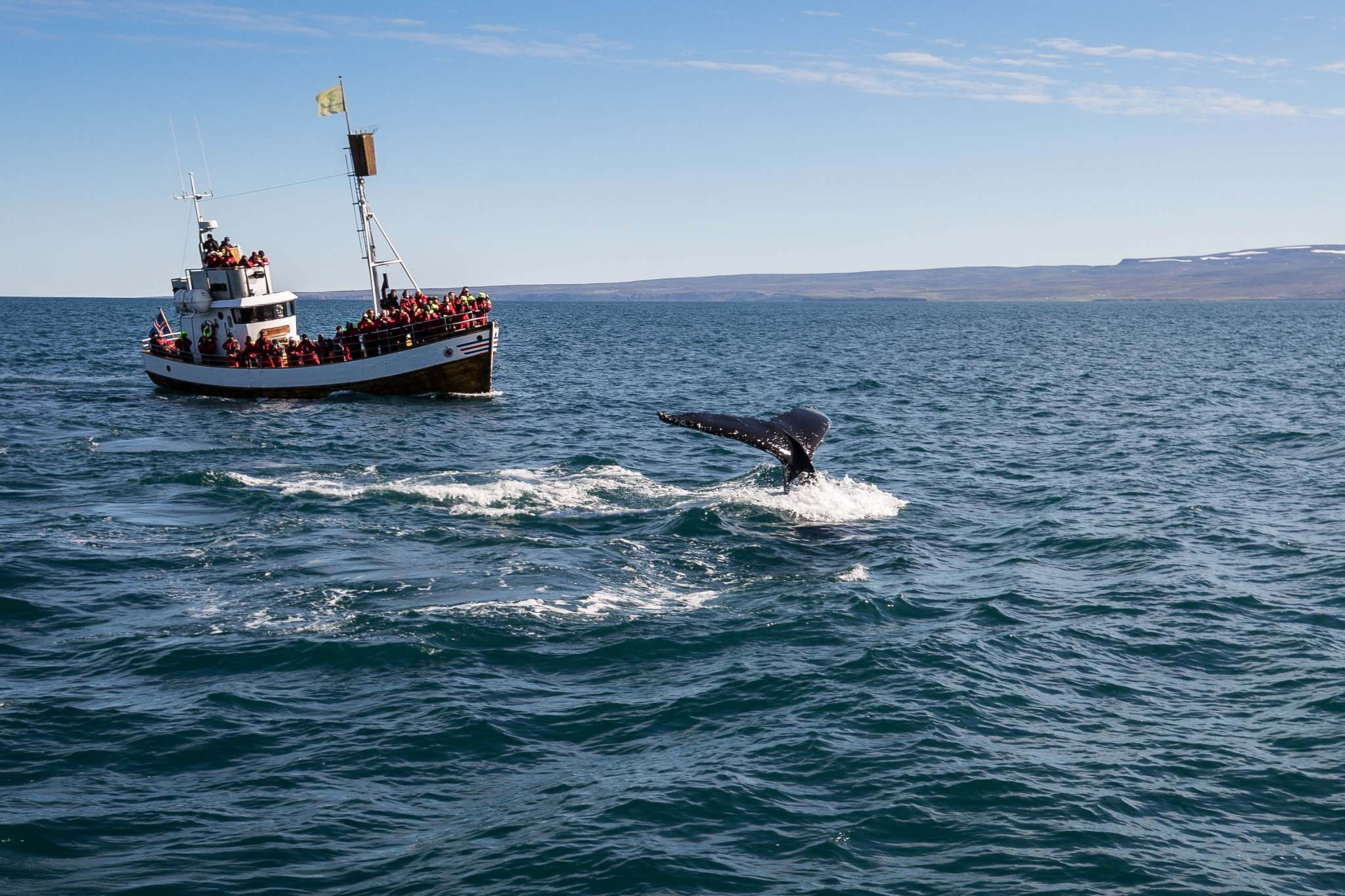 whale watching westfjords iceland